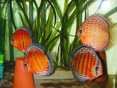 ionenaustauscher f rs aquarium. Black Bedroom Furniture Sets. Home Design Ideas